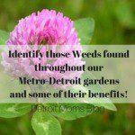 Outdoor Family Fun – Herb Walk!