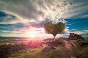 Love Heart Tree In Amazing Landscape