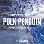 A Penguin Peek: A Look Inside Polk Penguin Conservation Center