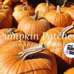 Pumpkin Patches Around Detroit