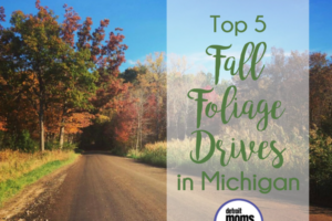 Top 5 Foliage Drives