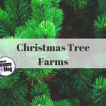 Guide to Christmas Tree Farms