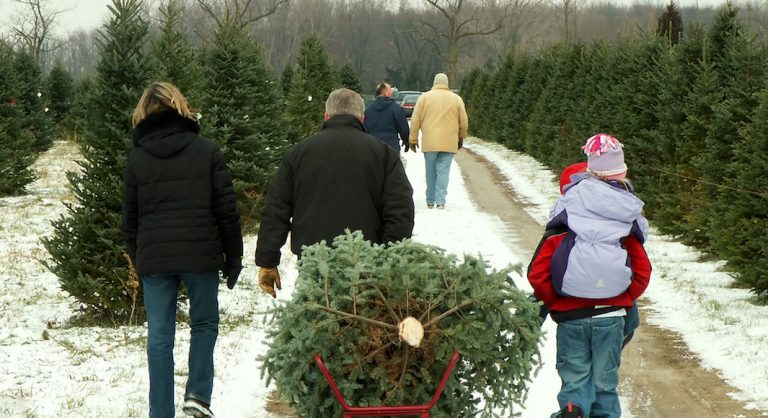Detroit Mom's Guide to Christmas Tree Farms In + Around Detroit