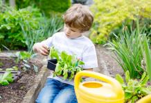 garden, gardening,